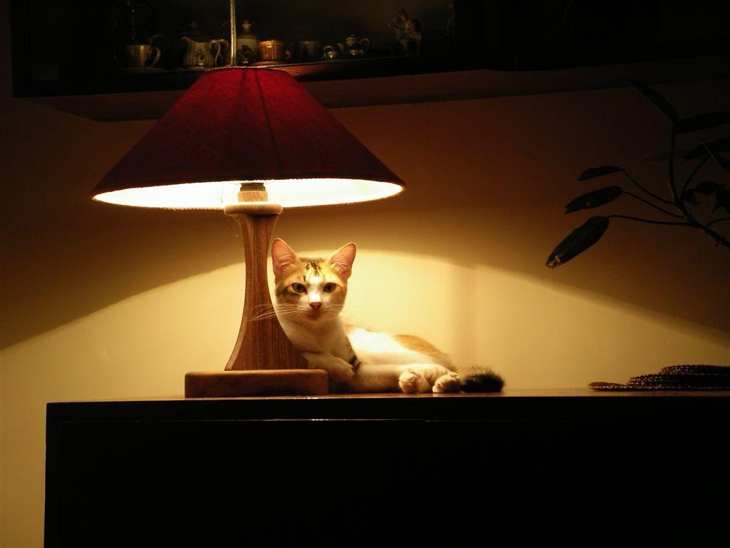 Black Cat Under Lamp Animal Shaped Lamps