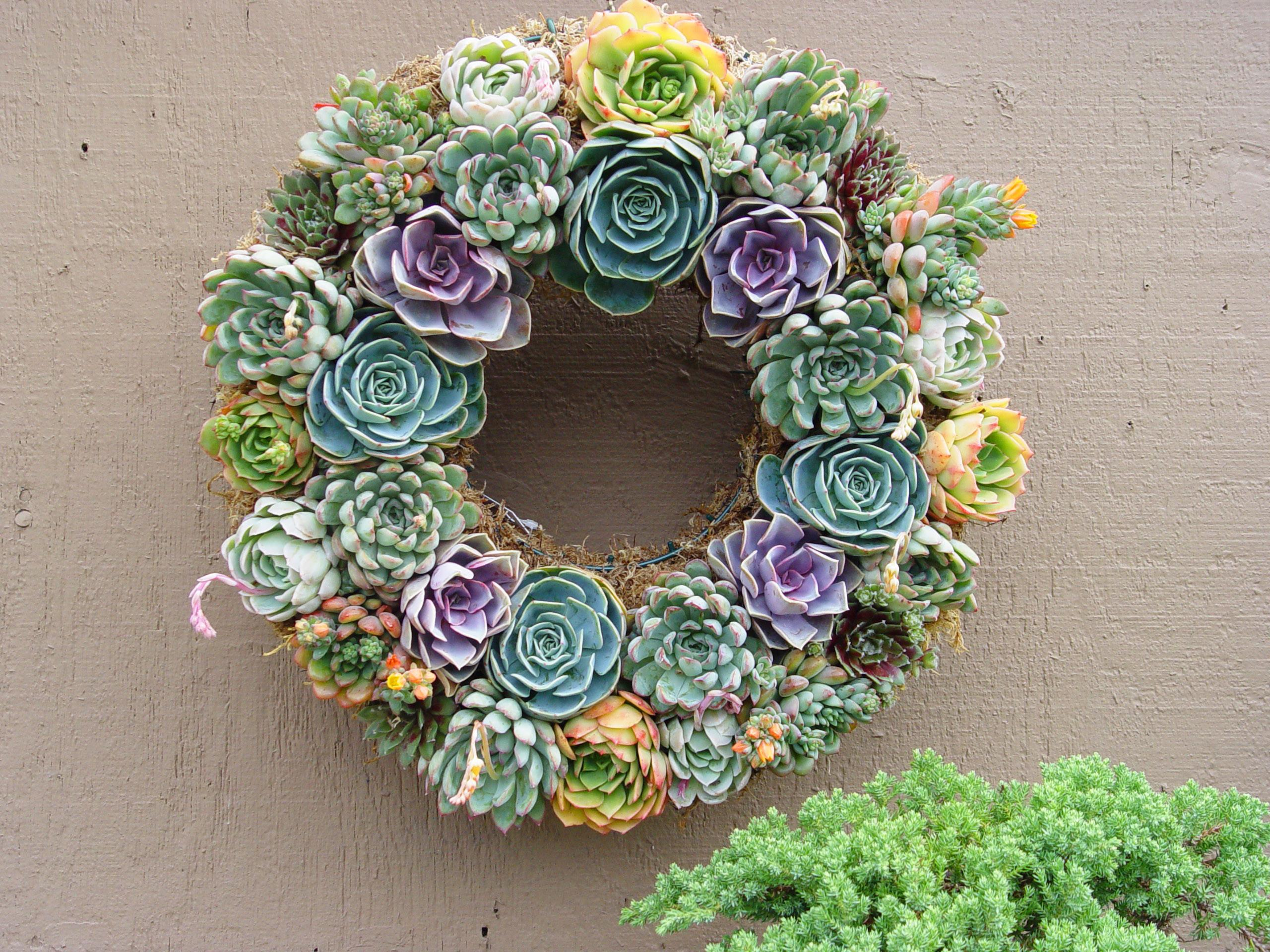 Black Gold Succulent Wreaths Renewed