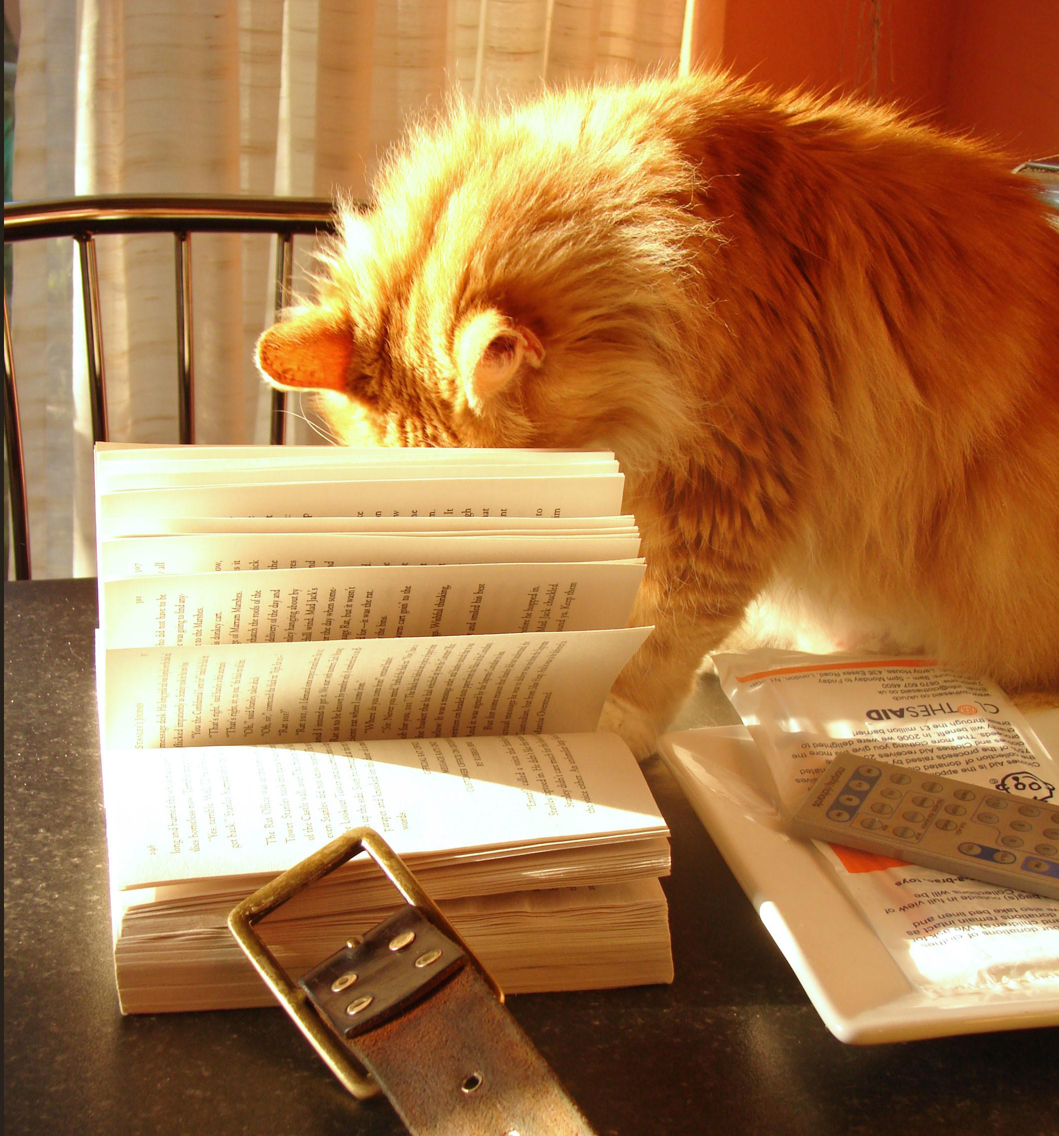 Books Every Dog Cat Owner Should Own Walkers