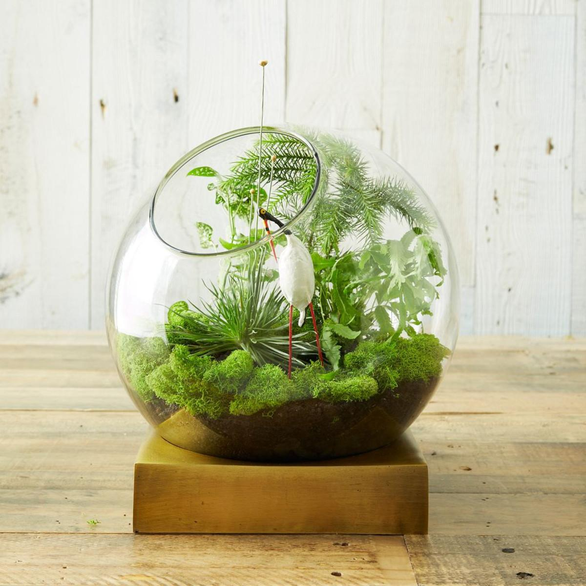 Brass Base Terrarium
