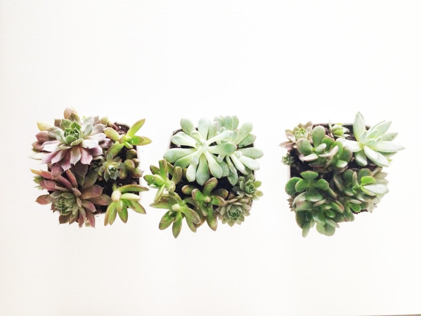 Bright Bold Itty Bitty Succulents