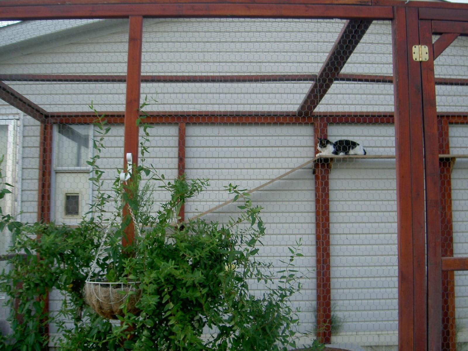 Build Outdoor Cat Enclosure Catioteediddlydee