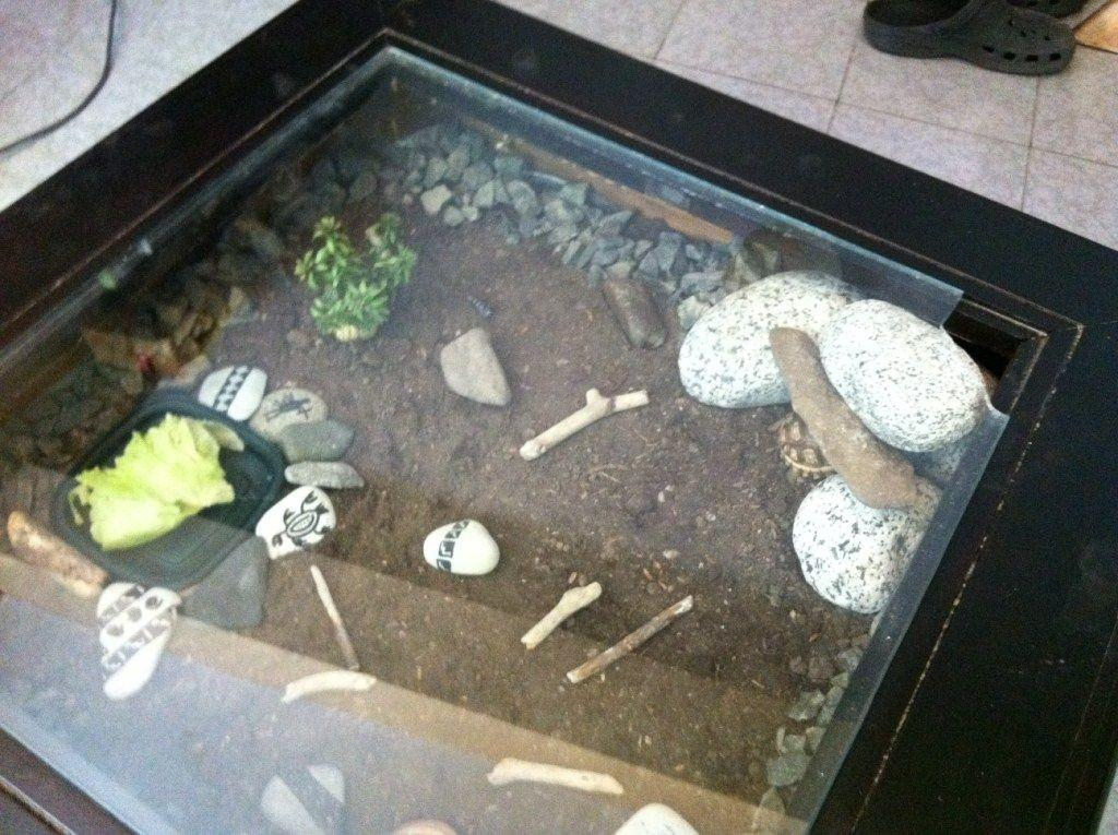 Build Wooden Terrarium Table Outdoor Decorations