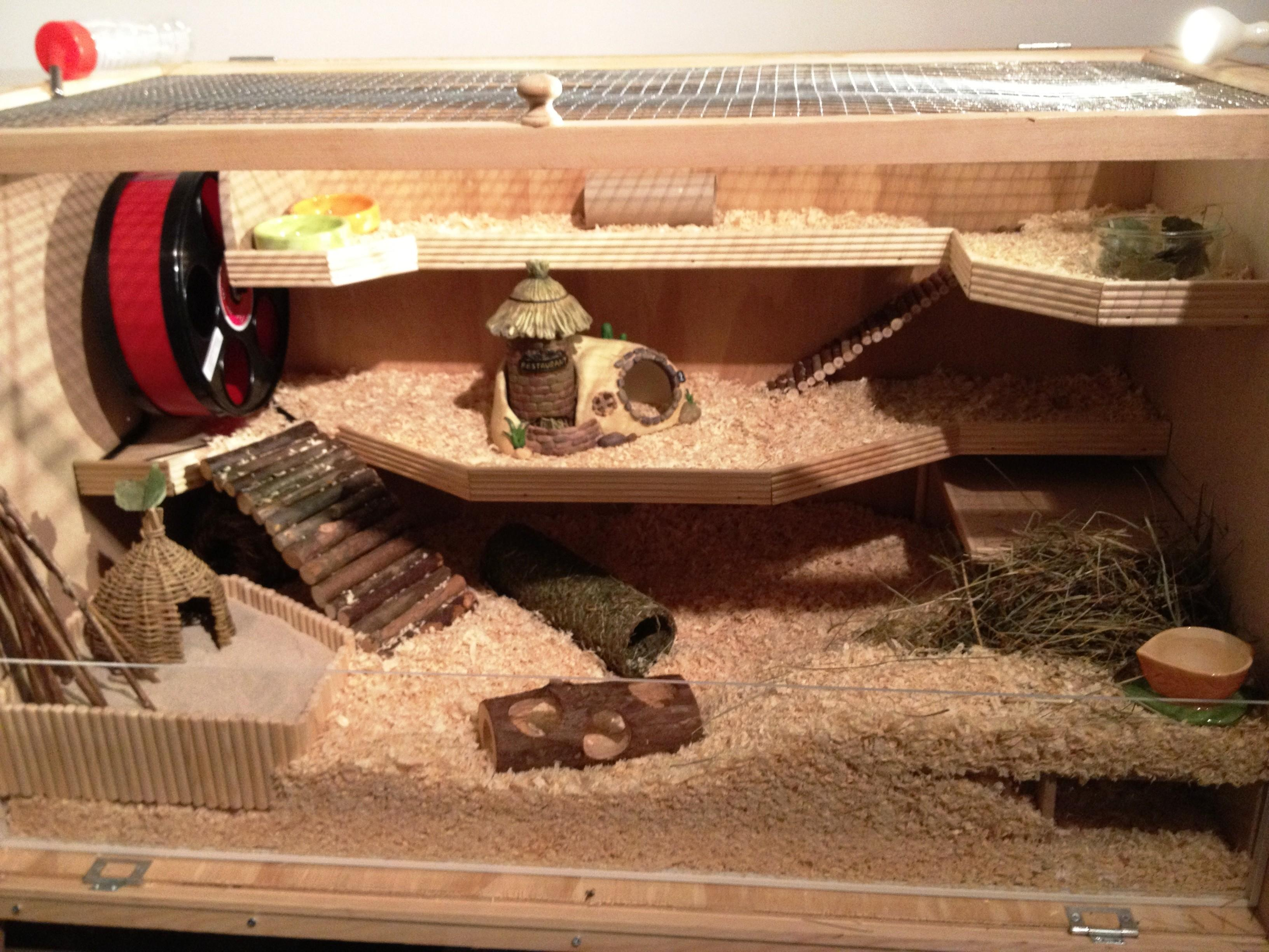 Build Your Own Hamster Cage Guide Babblepie
