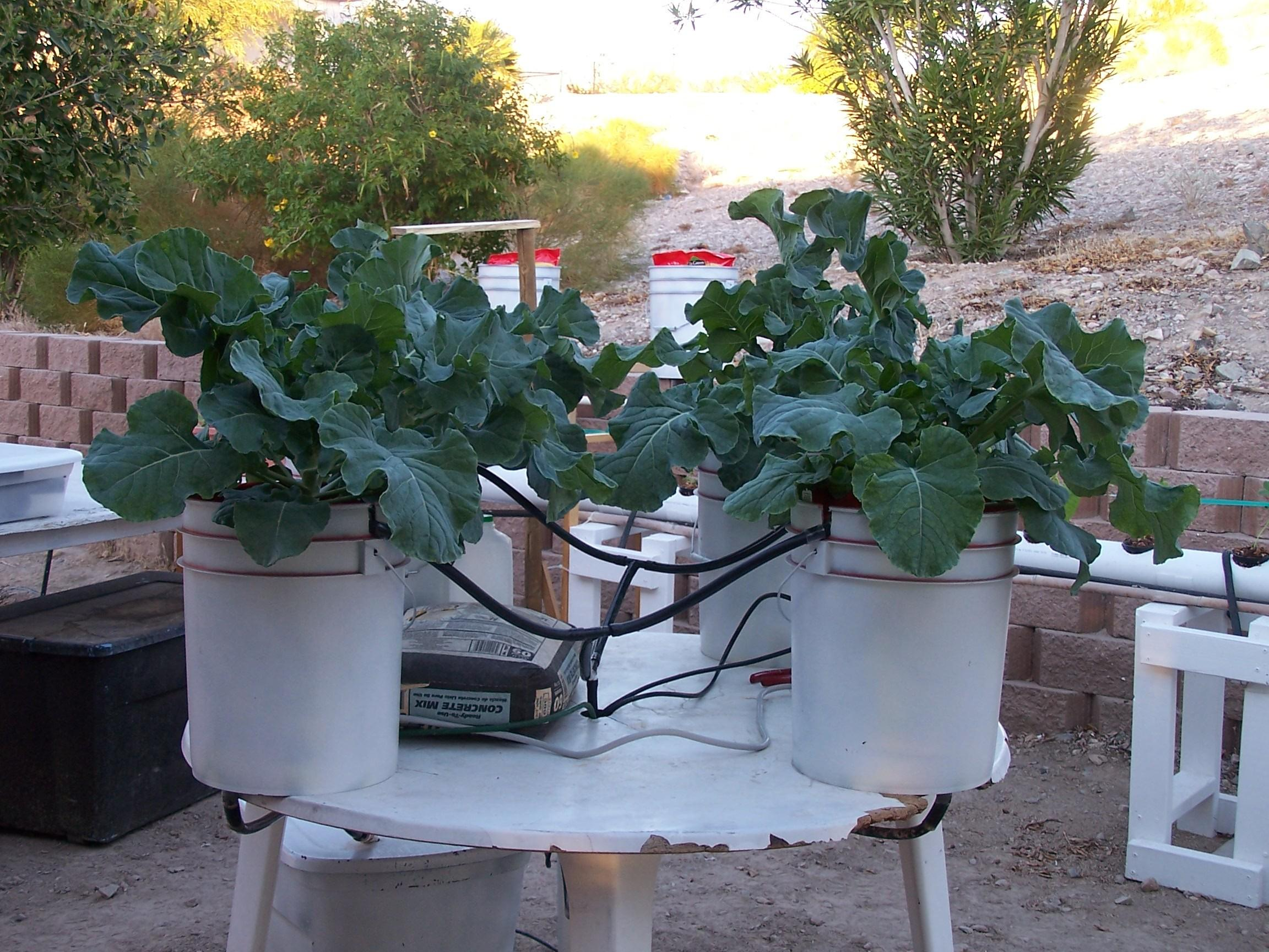 Build Your Own Hydroponics Bucket Drip System
