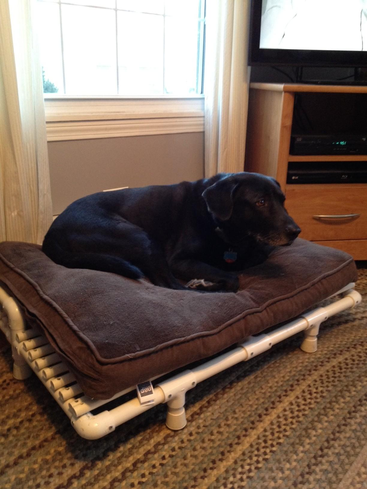 Build Yourself Pvc Raised Dog Bed