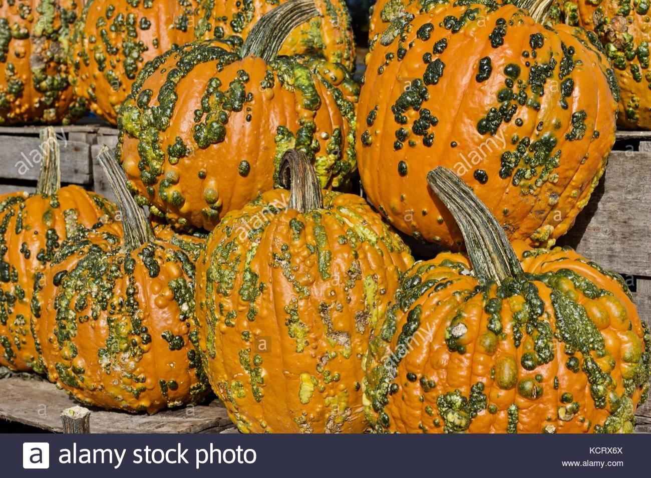 Bumpy Squash Stock Photos Alamy