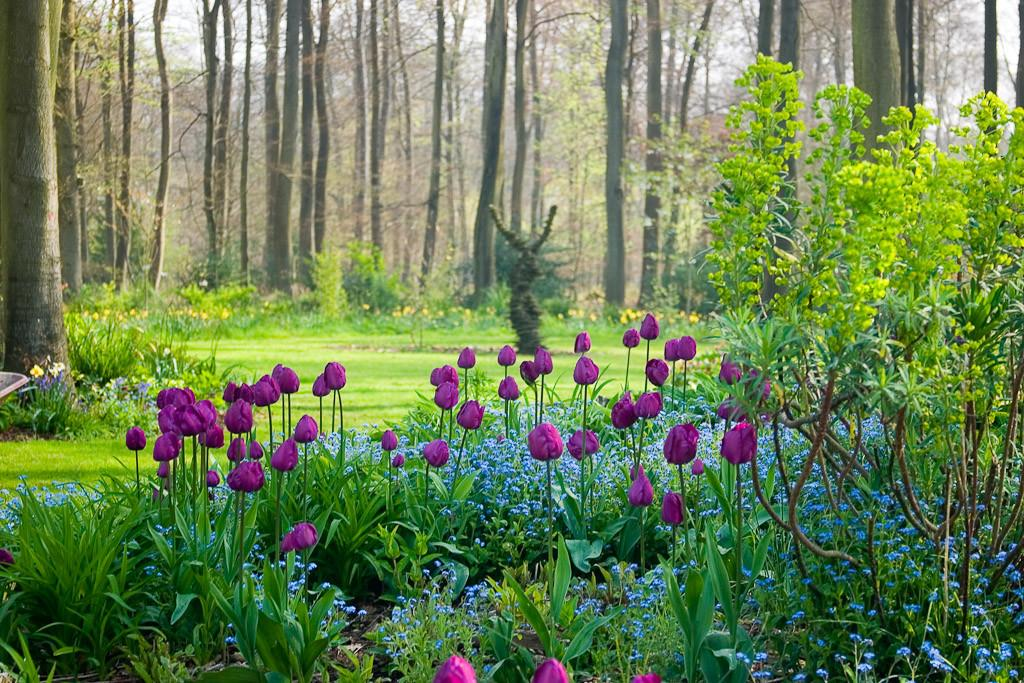 Buy Spring Bulbs Now But Which Blooming Ones