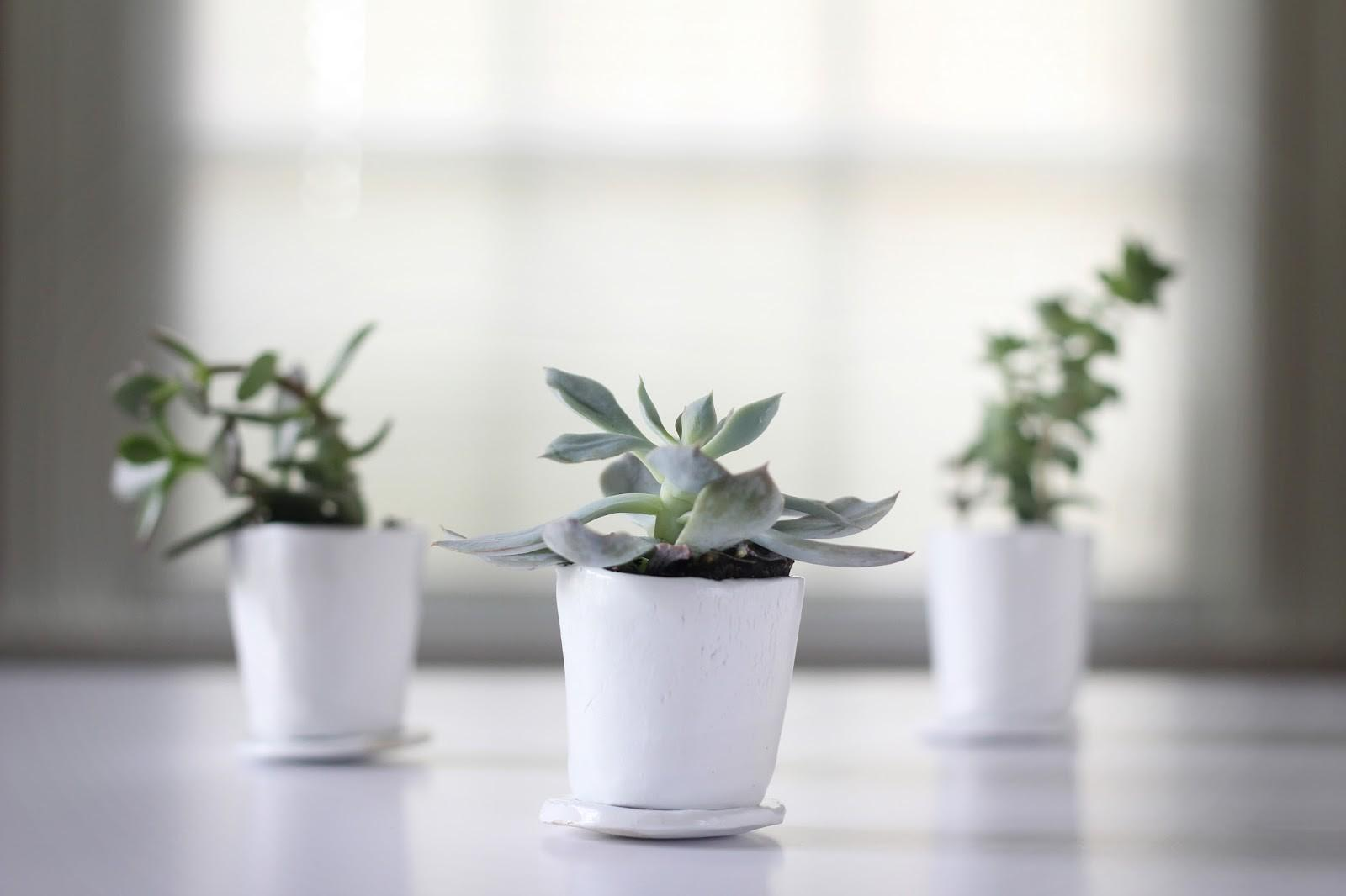 Can Make Anything Diy Succulent Pots