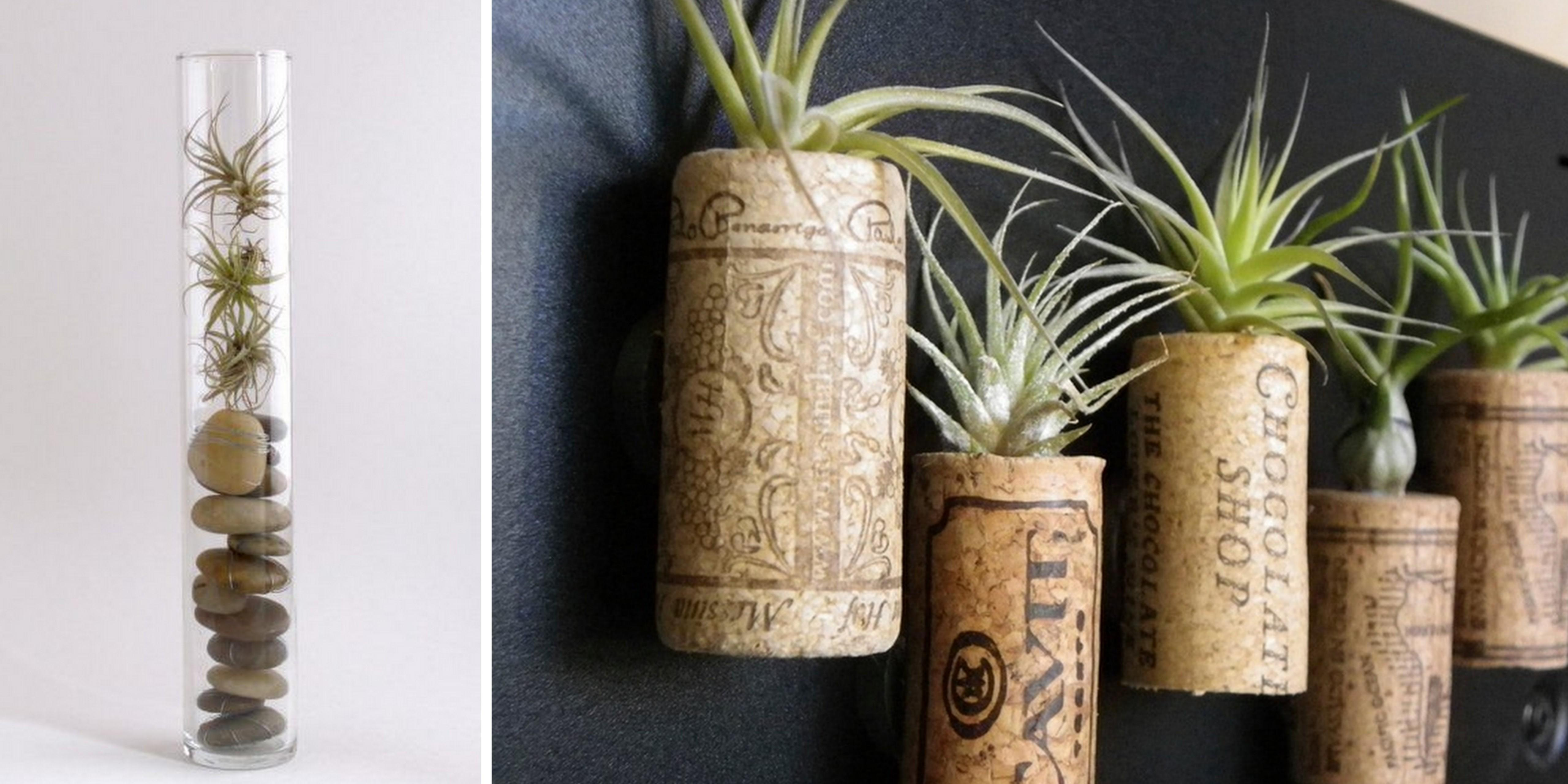 Captivating Air Plant Display Ideas New Design Room