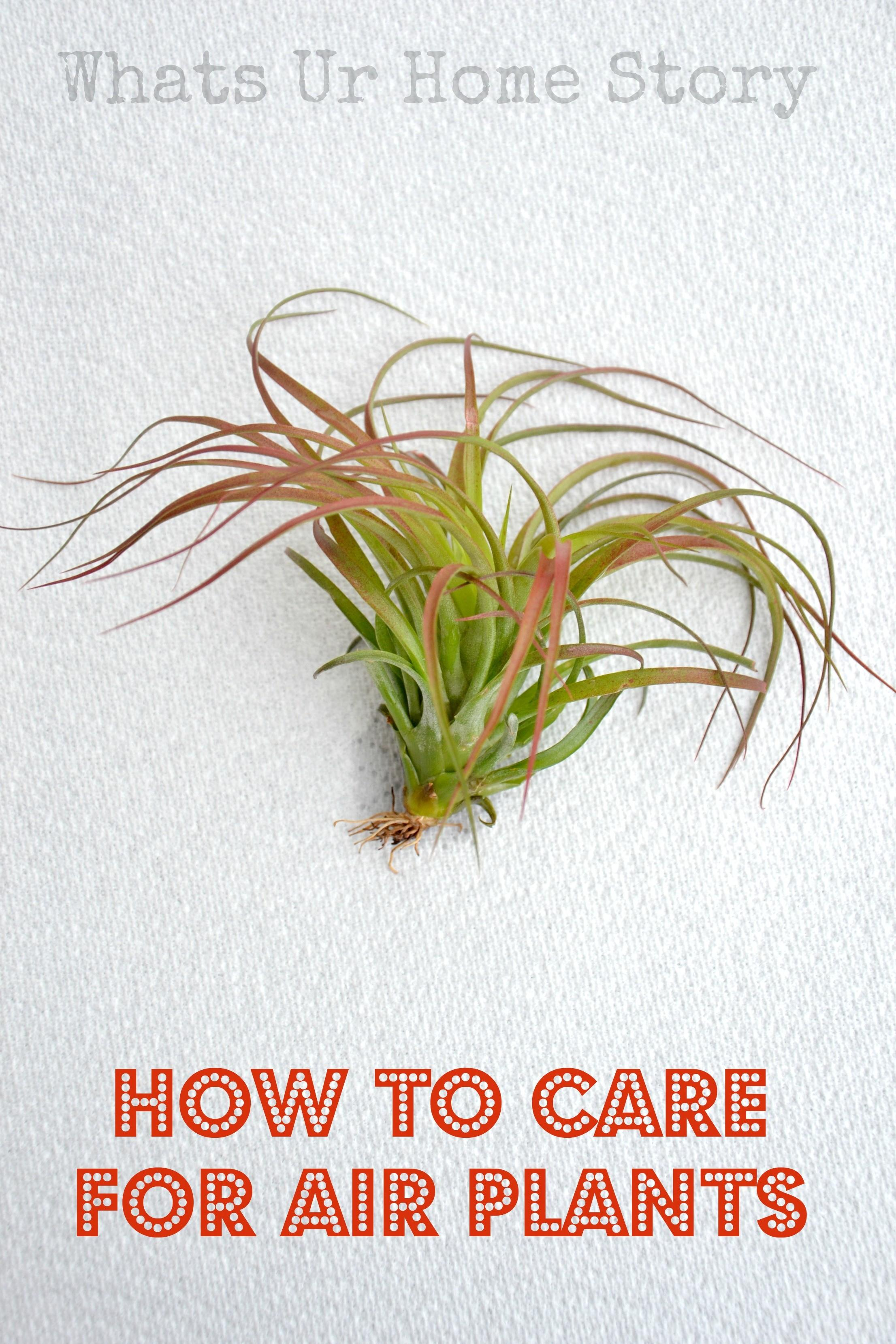 Care Air Plants Whats Home Story