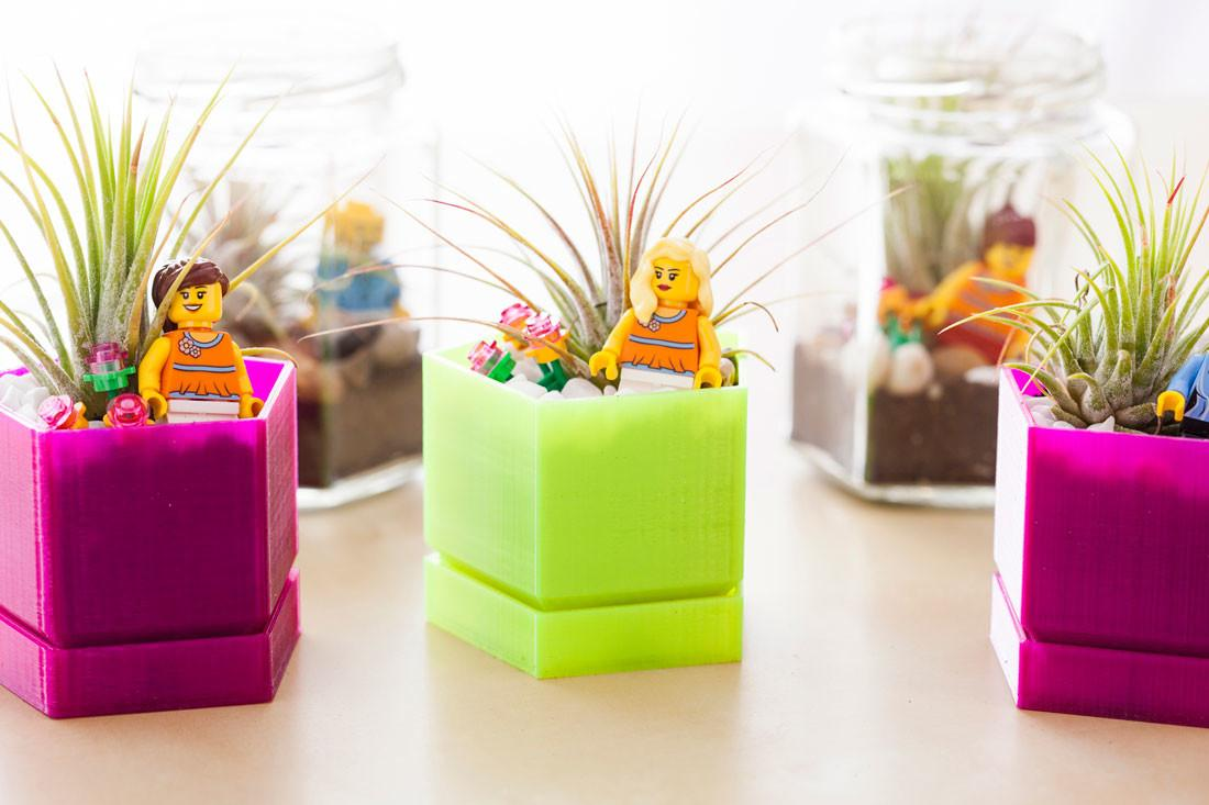 Care Lovely Air Plants Adorn Your Home