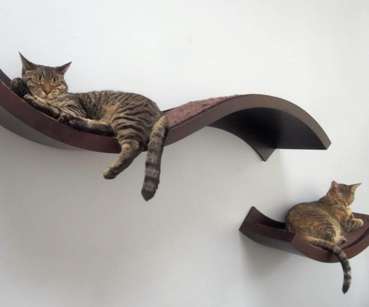 Cat Wall Shelves Singapore Ritzy Cats Bookshelf Bed