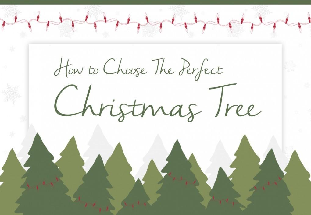 Choose Perfect Christmas Tree Luxpad