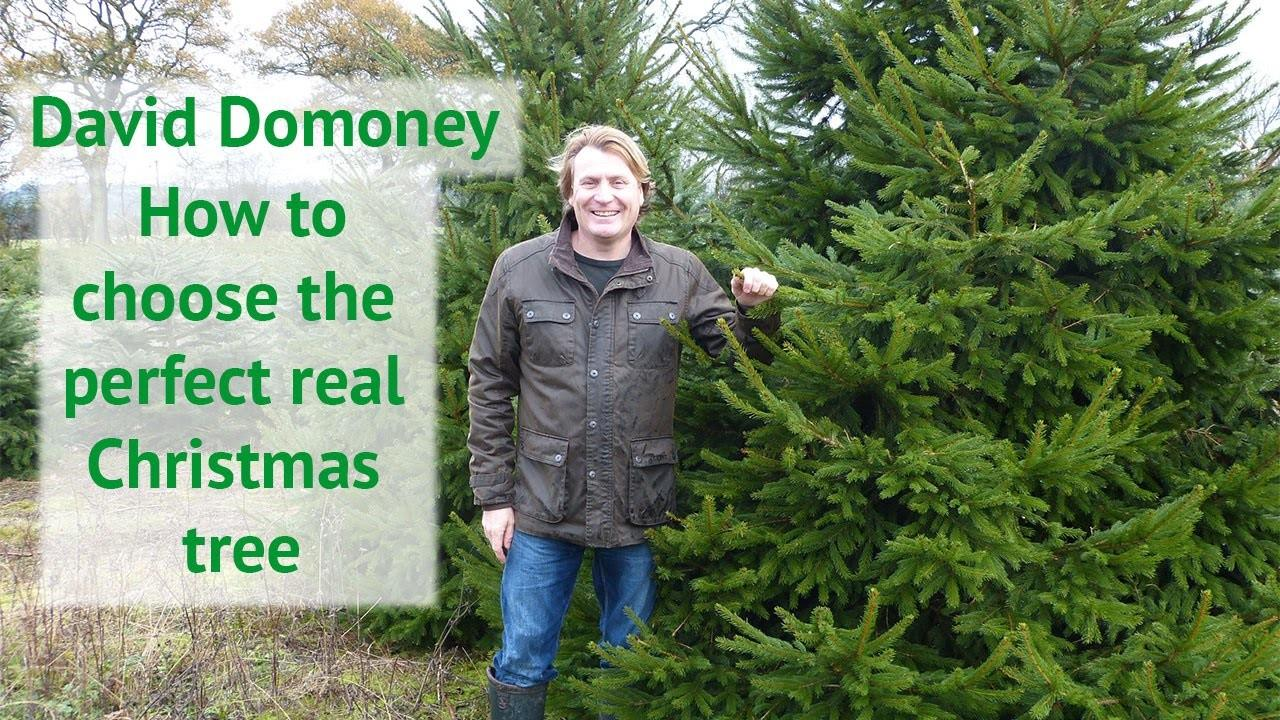 Choose Perfect Real Christmas Tree David