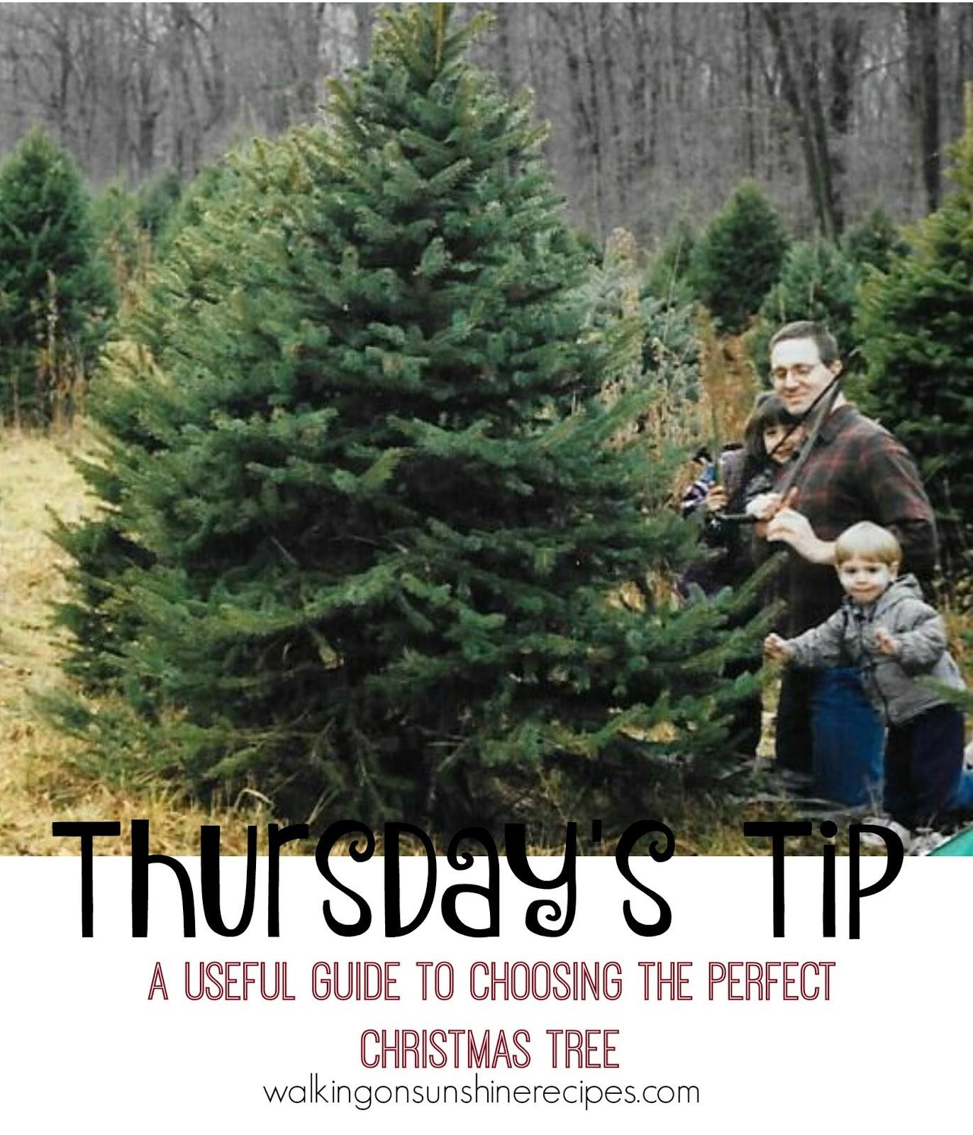 Choosing Perfect Christmas Tree Thursday Tip