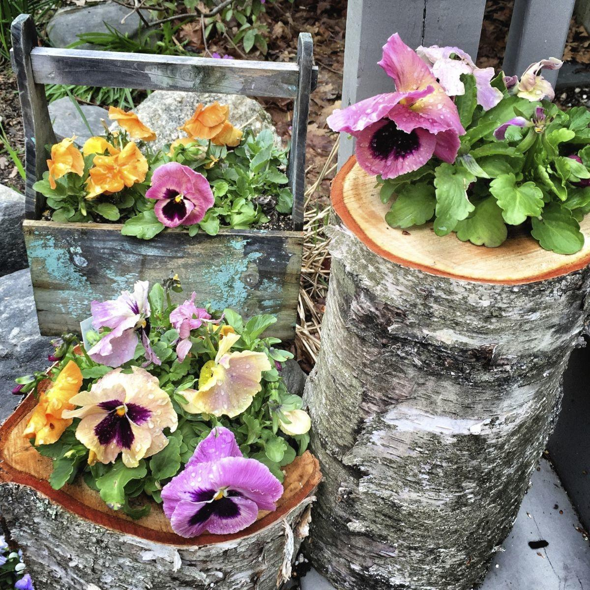 Choosing Plants Container Gardens