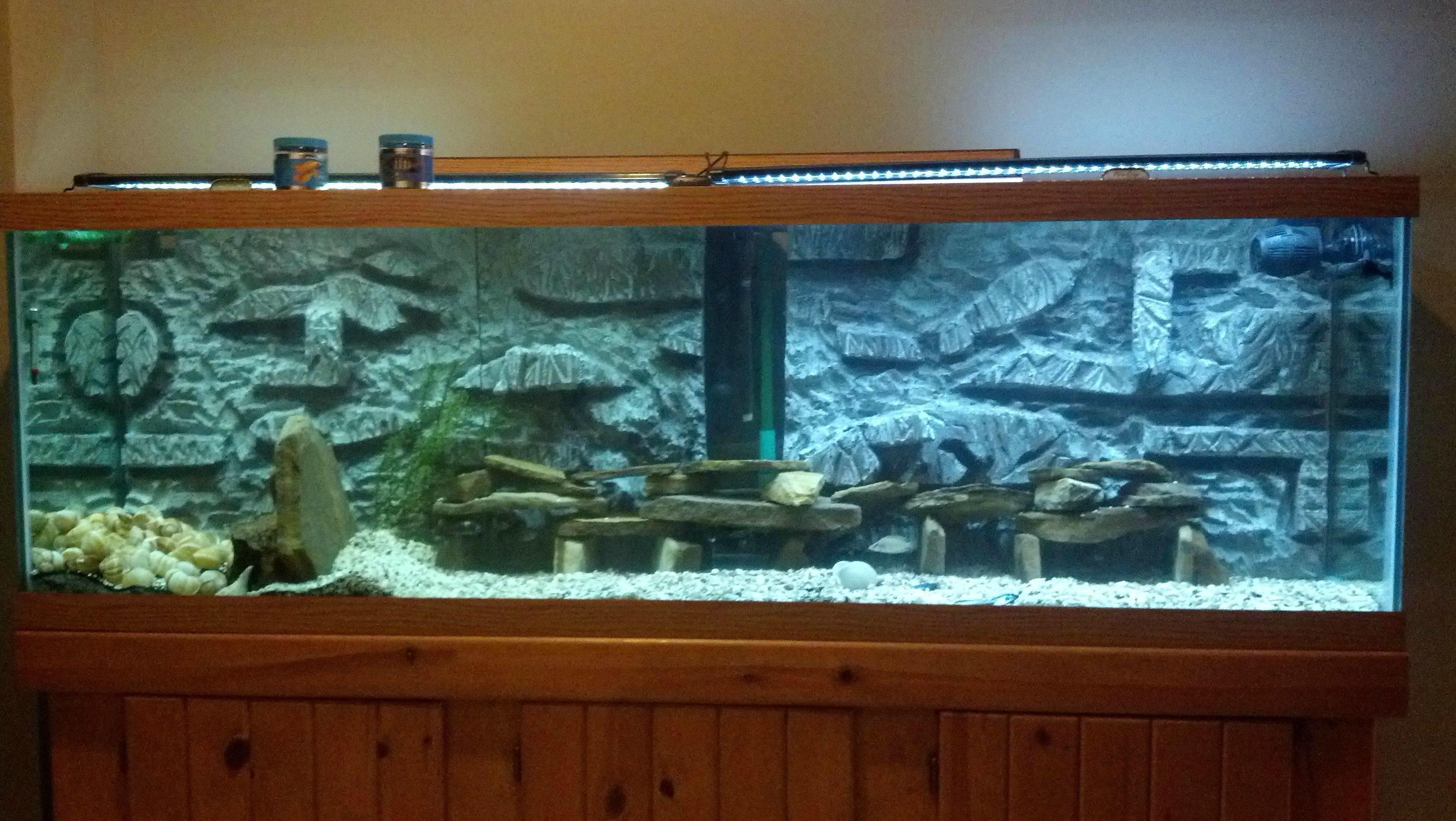 Cichlid Forum Another Diy Build