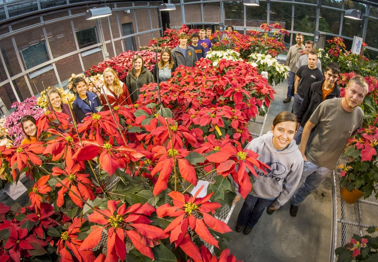 Clemson Horticulture Students Poinsettias Display