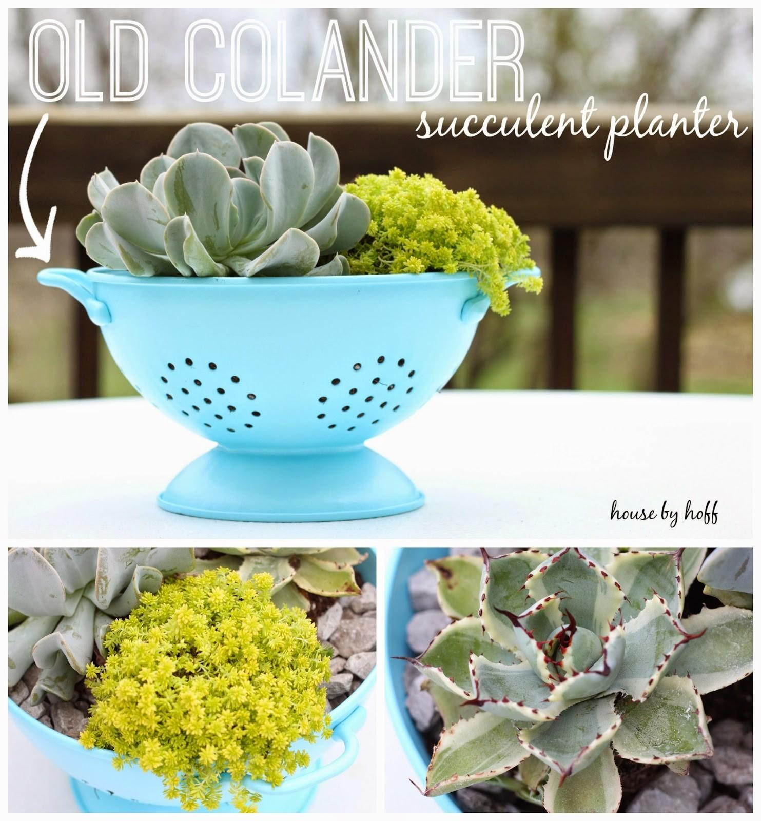 Colander Upcycle Into Succulent Planter Totally Green Crafts