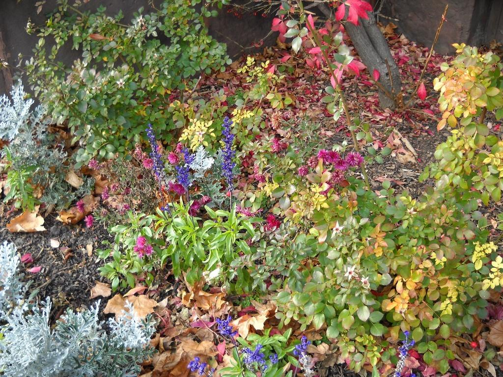 Cold Temperature Plants Best Fall Garden