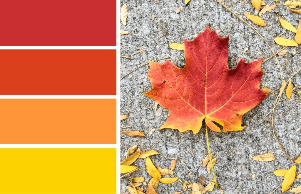 Color Inspiration Fall Leaves Merriment Design