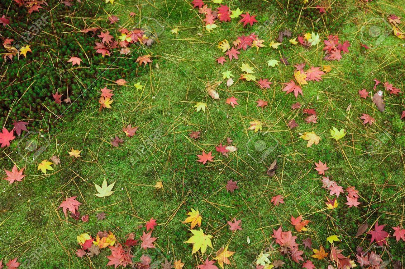 Colorful Autumn Leaves Green Moss Japanese Zen
