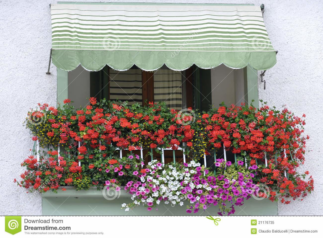 Colorful Balcony Flowers Italy Royalty Stock