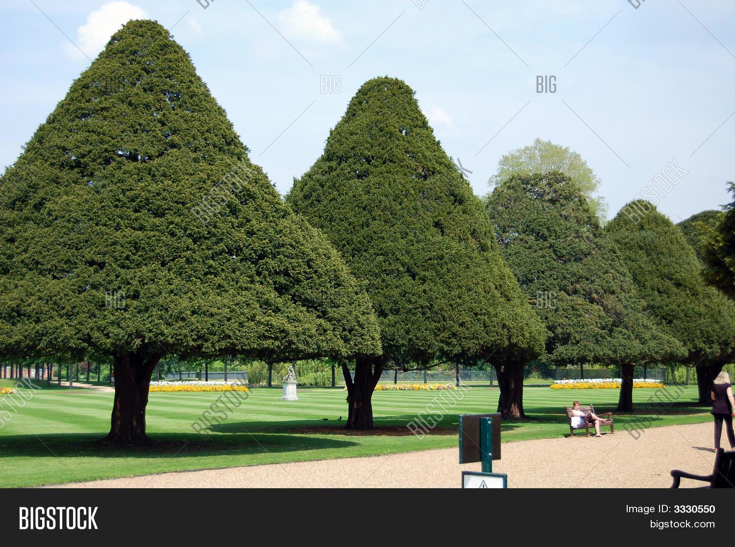 Cone Shaped Trees Bigstock