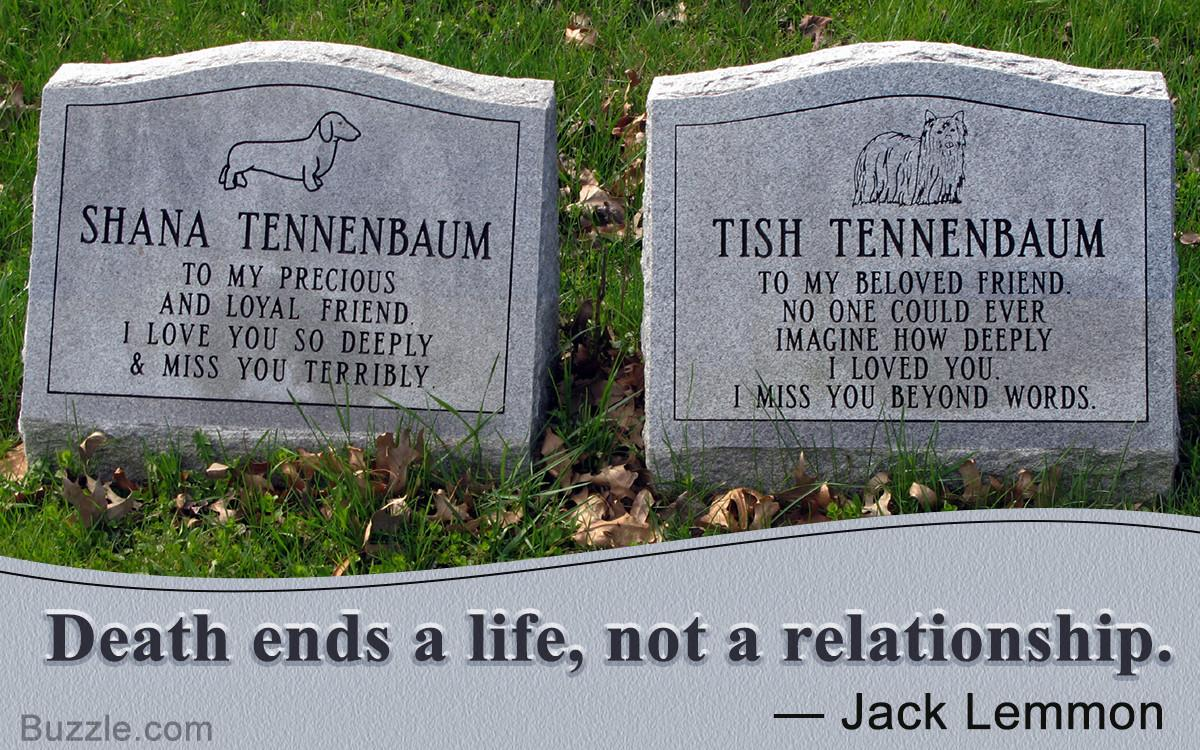 Consoling Quotes Help Cope Loss Pet