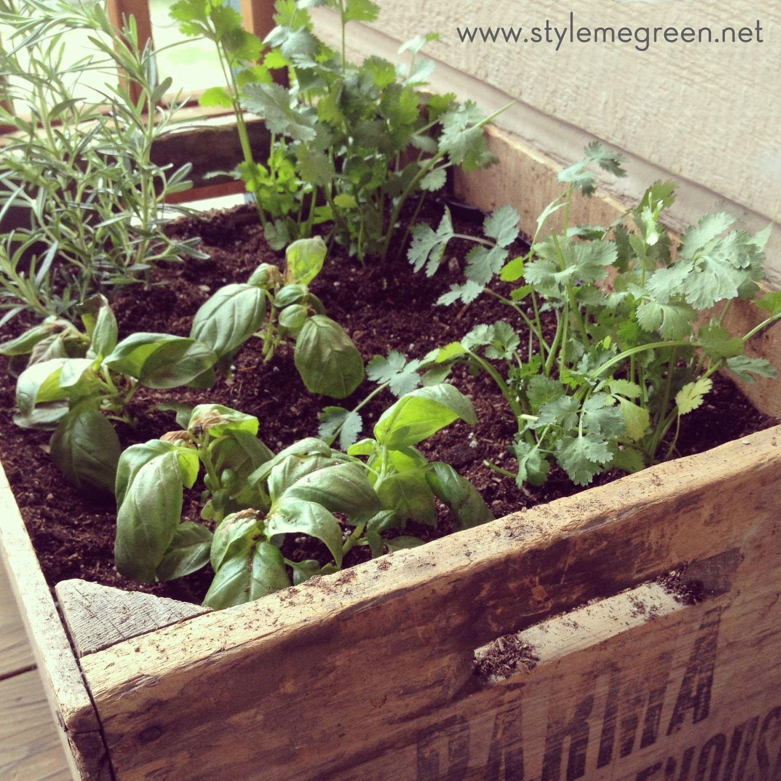 Container Herb Garden Ideas Lovely Diy Pallet Coffee
