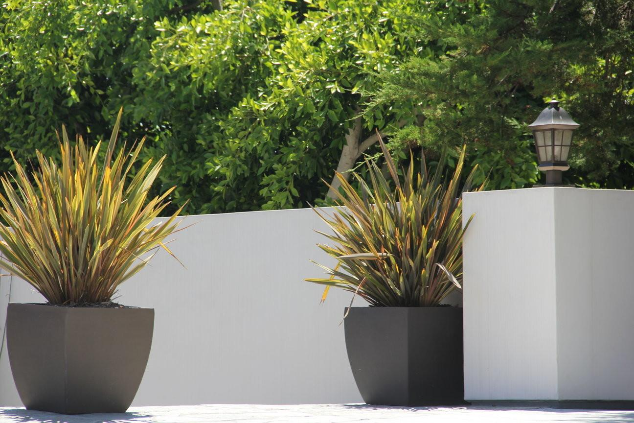 Containers Plants