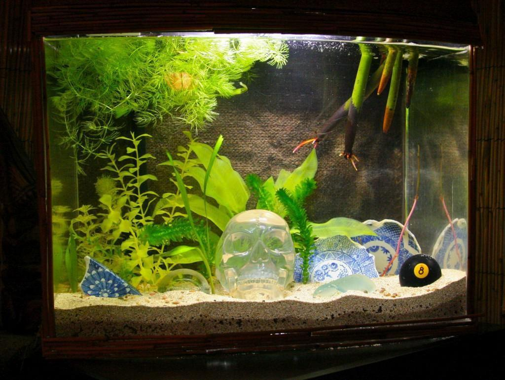 Cool Fish Tank Ideas Harper Noel Homes