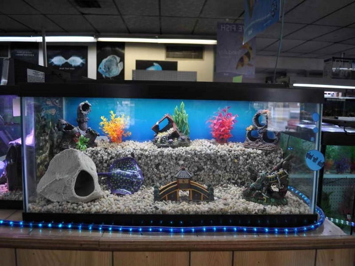 Cool Fish Tanks Designs Imgkid Kid