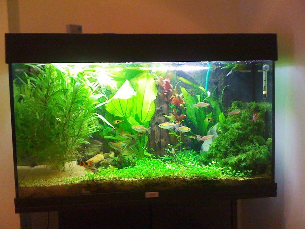 Cool Fish Tanks Enchanting Amazing