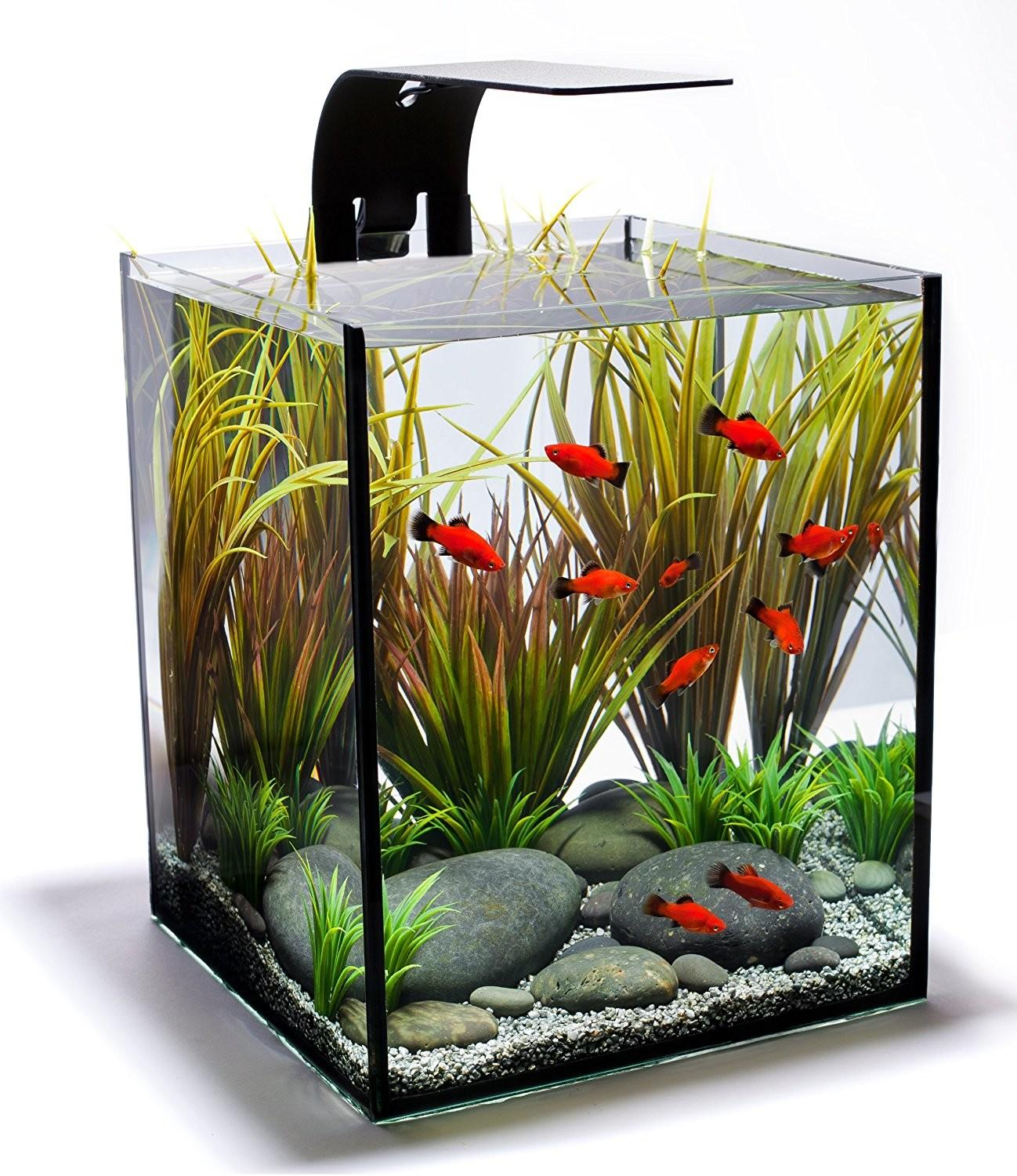 Cool Fish Tanks Modern Aquarium Design
