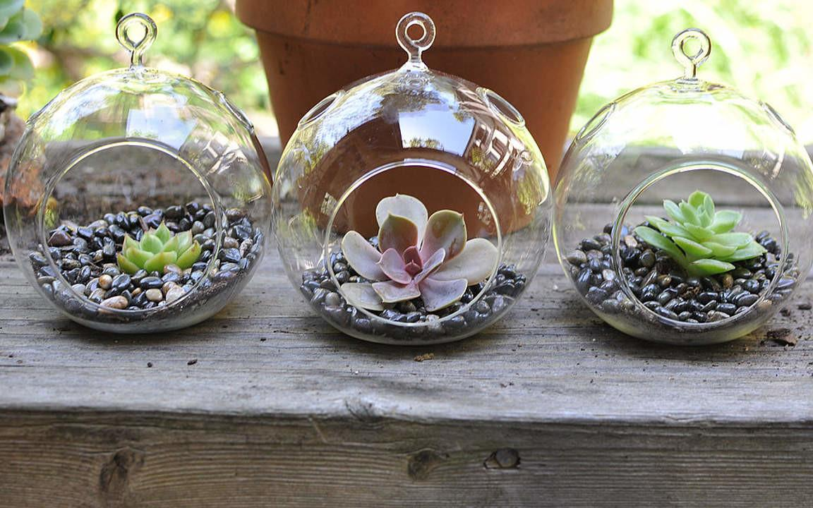 Cool Terrarium Ideas Can Copy
