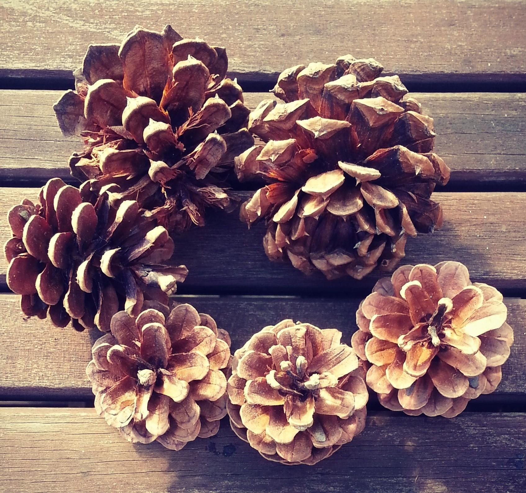 Copper Dipped Pinecones Literally Diy