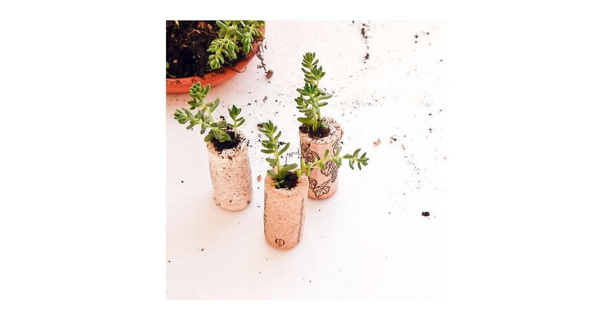Cork Planters Diy Host Gifts Popsugar Smart Living