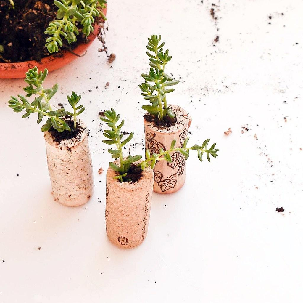 Cork Planters Diy Stocking Stuffers Popsugar Smart