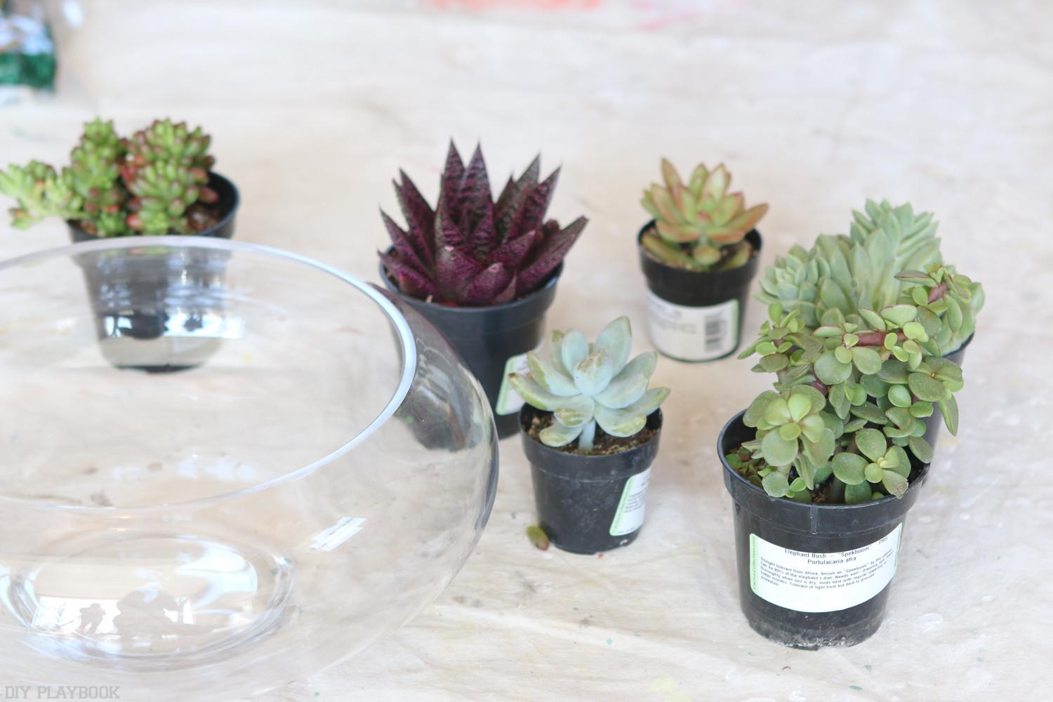 Creating Super Easy Diy Terrarium Your Coffee Table