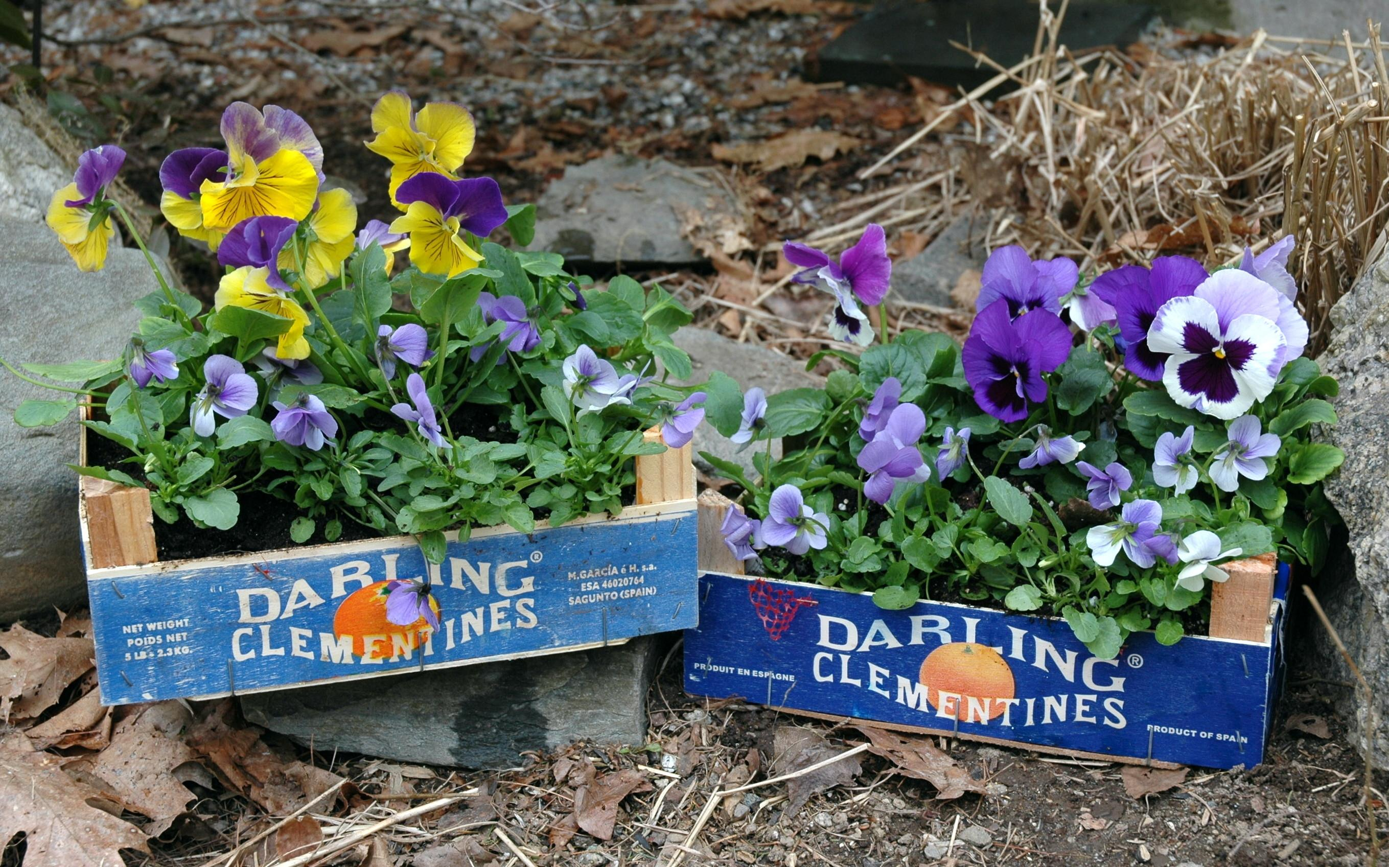 Creative Colourful Container Gardening Chez