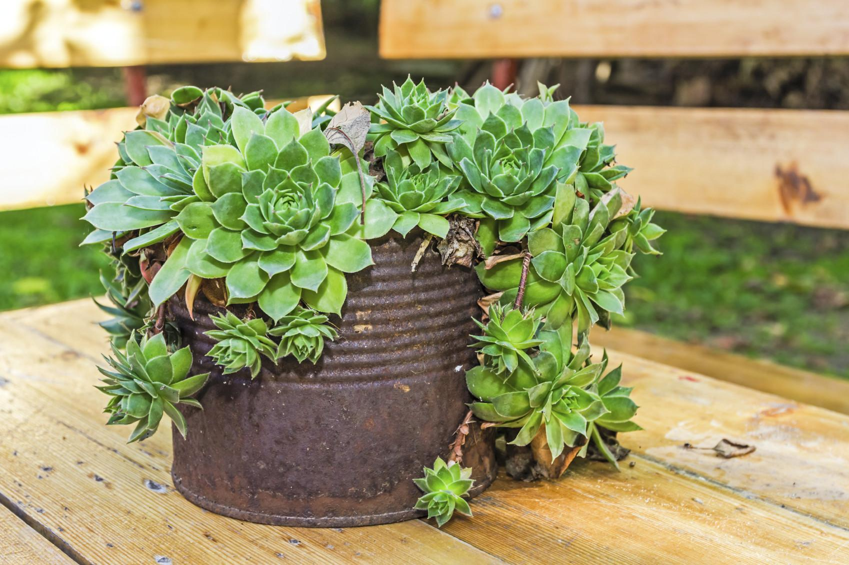 Creative Containers Succulents Using Interesting