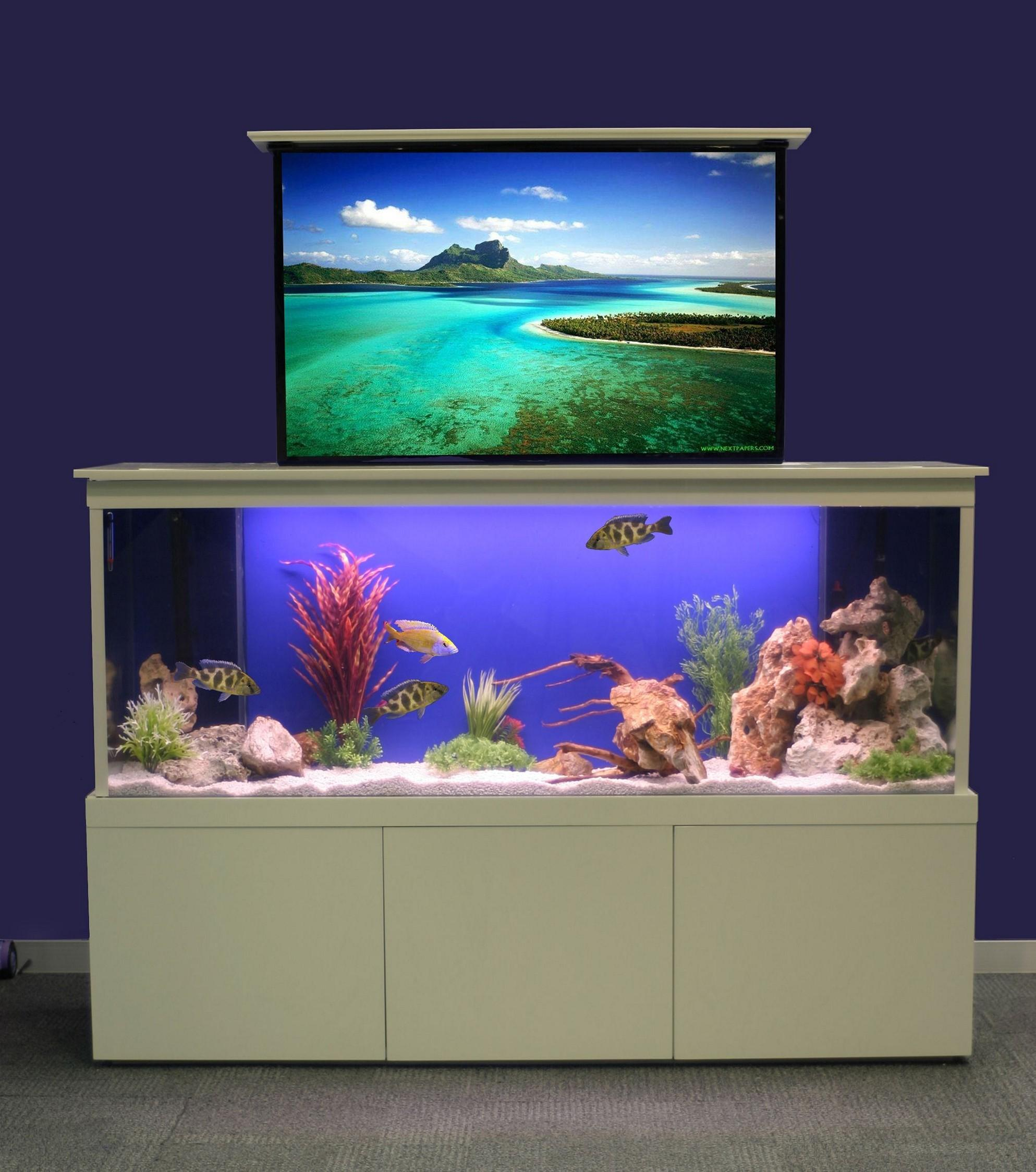 Creative Cool Fish Tanks Ideas