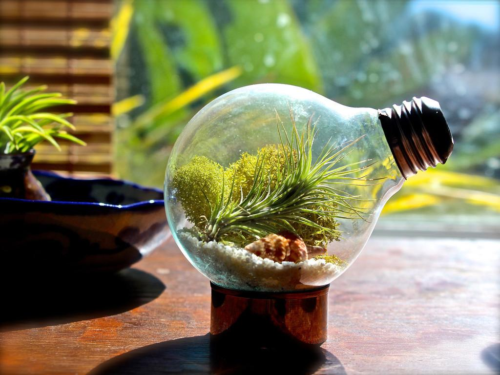 Creative Diy Terrarium Glass Air Plant Containers