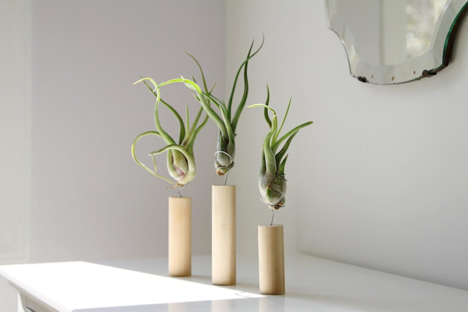 Creative Ideas Air Plant Decor Amaze