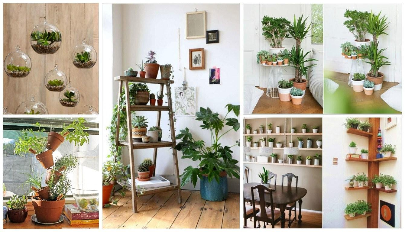 Creative Ideas Display Your Indoor Plants
