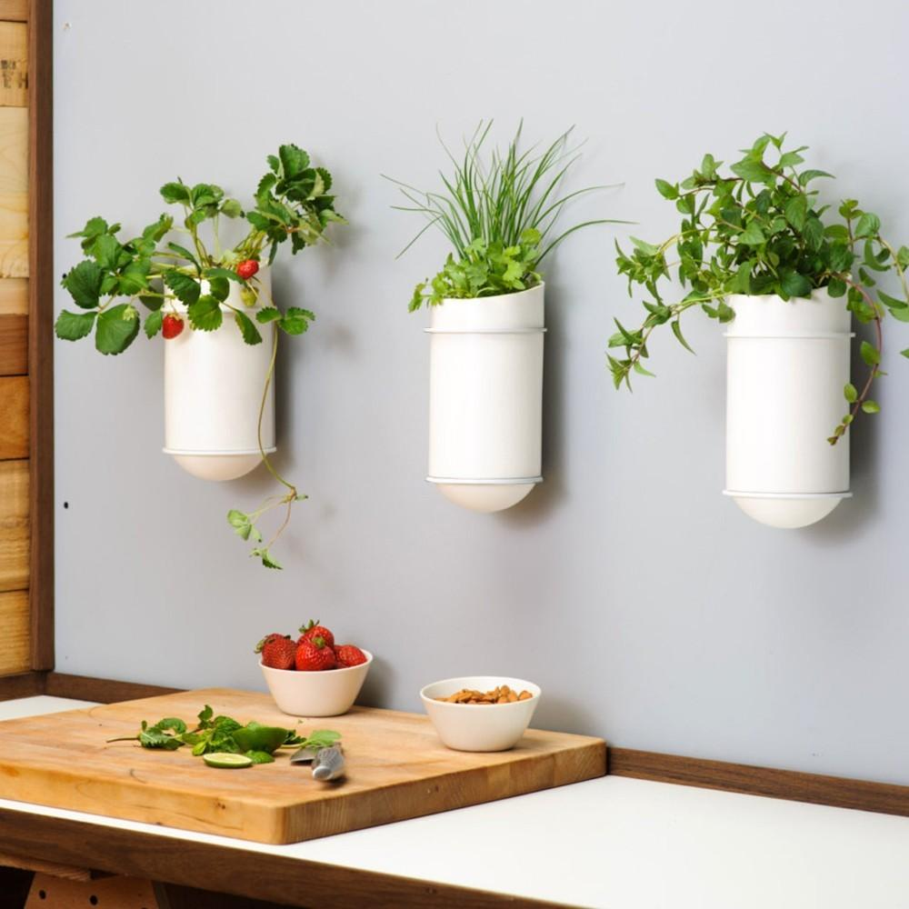 Creative Indoor Wall Planters Placement Decor