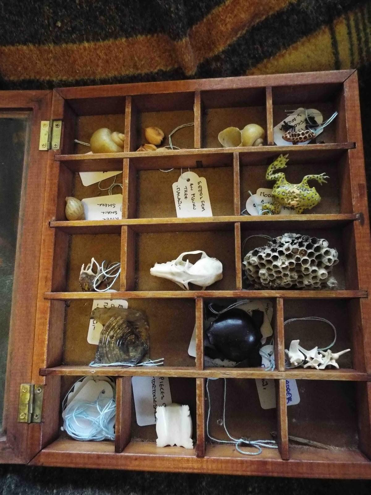 Creeping Toad House Wonders Public Event