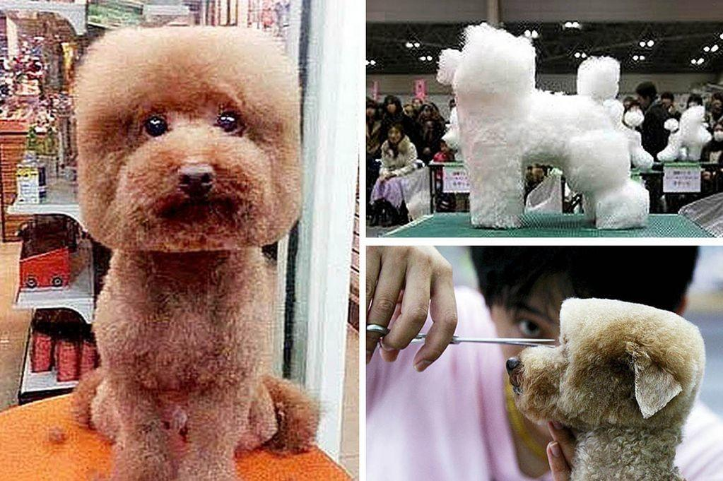 Cube Dogs Japan New Pet Grooming Craze Leaves Pooches